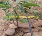 多种陕西西安精品16mm优质小管出流PE管价格 苹果滴灌