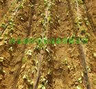 齐全河南西瓜灌溉滴灌黑管|大棚滴灌配置
