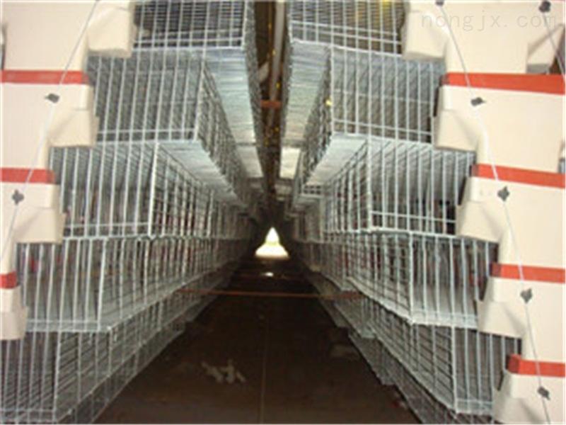 广东鸡笼蛋鸡笼畜禽笼养设备