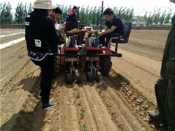 移栽机|番茄专用移栽机|移栽高效成活率高|田耐尔