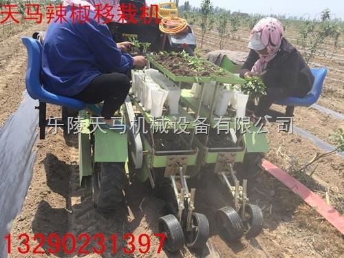 2ZQ-2-天马机械长期供应各种蔬菜移栽机