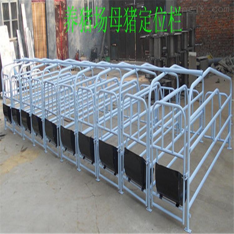 供应求购养殖设备 养猪设备 母猪定位栏 限位栏 厂家生产直销