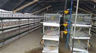 自动调节养殖农牧机械组合养殖笼养设备,饲养笼